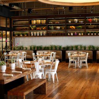 True Food Kitchen - San Diego FV
