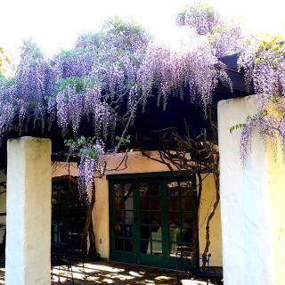 A photo of Cafe Wisteria restaurant
