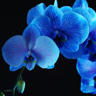 Blue Orchid Thai Cuisineの写真