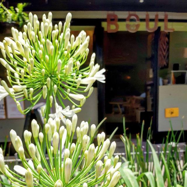 Boul Cocina Latina Restaurant Ciudad De Mexico Cdmx Opentable