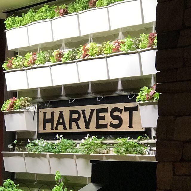 Harvest Seasonal Grill & Wine Bar-Radnor, Radnor, PA