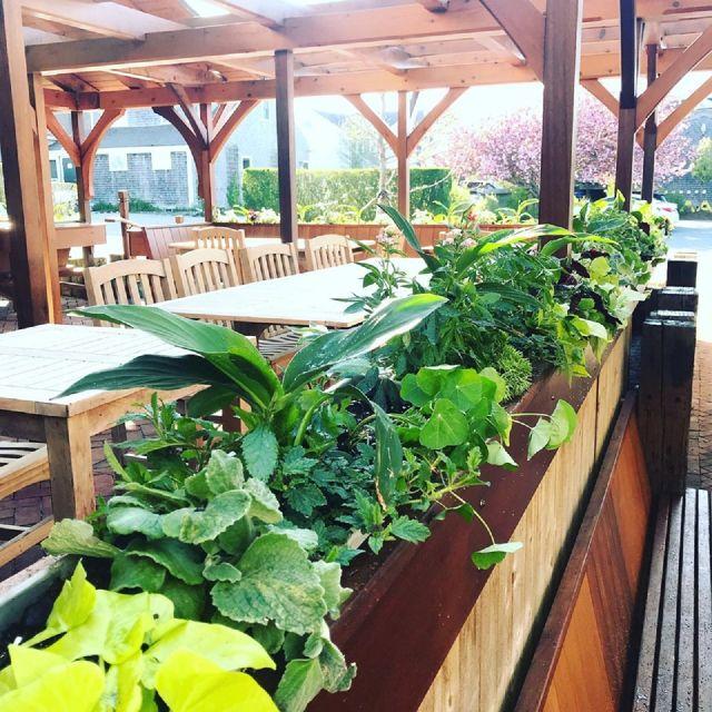 Island Kitchen Restaurant - Nantucket, MA | OpenTable