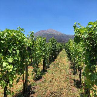 Cantina del Vesuvio Wineryの写真
