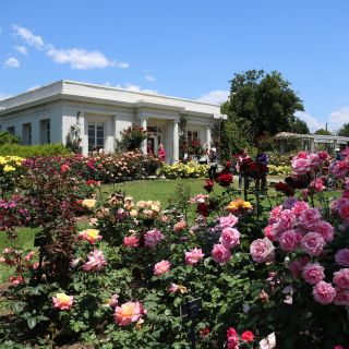 A photo of The Huntington's Rose Garden Tea Room restaurant