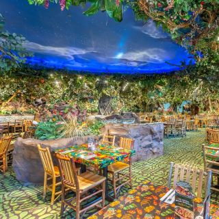 Rainforest Cafe - Chicago Gurnee